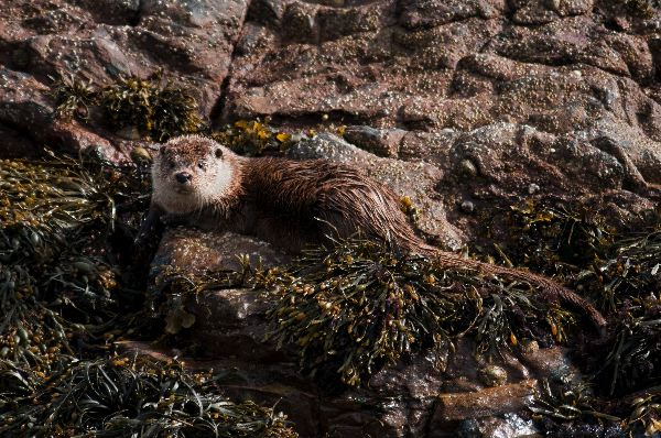 Otter on the shore